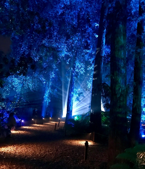 Enchanted Forest of Lights